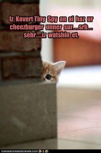 caption captioned cat corner kitten peeking spy spying tiny wall watching - 4450829312