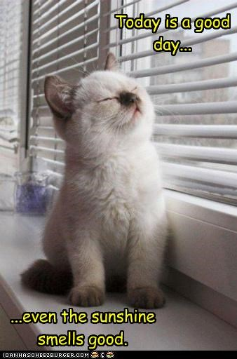 caption captioned cat content day excited good good day Hall of Fame happy kitten smells smiling sun sunny sunshine today - 4450994944