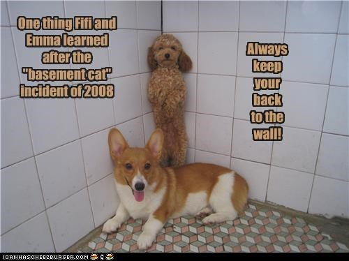"""One thing Fifi and Emma learned after the """"basement cat"""" incident of 2008 Always keep your back to the wall!"""