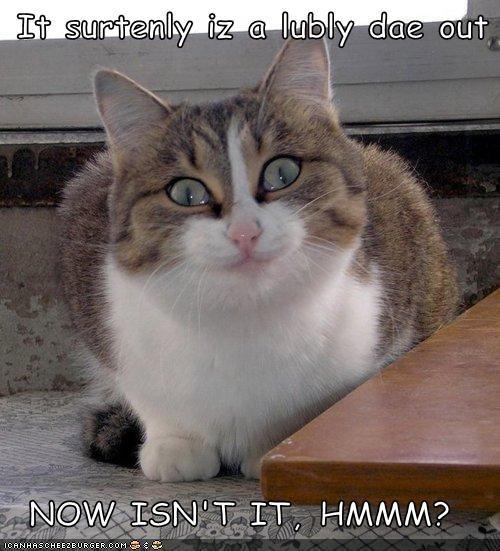 Cheezburger Image 4451063296