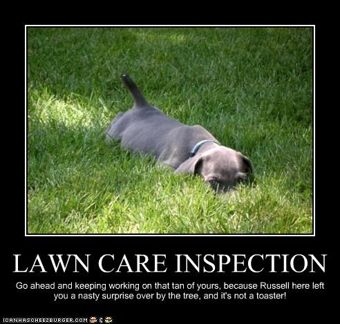 LAWN CARE INSPECTION Go ahead and keeping working on that tan of yours, because Russell here left you a nasty surprise over by the tree, and it's not a toaster!