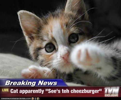 Cheezburger Image 4451760640