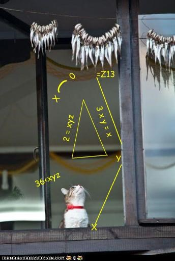 calculation caption captioned cat do want equation fish lunch math planning plans window - 4452154624