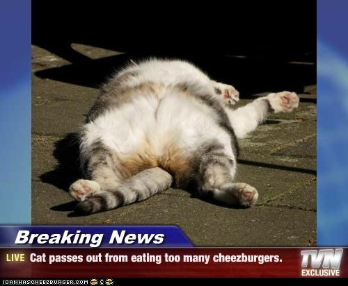 Cheezburger Image 4452190208