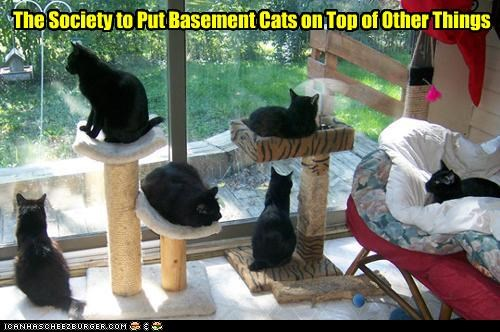basement cat caption captioned cat Cats on top other society things