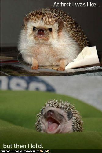 at-first-i-then-i caption captioned grumpy hedgehog hedgehogs lol multipanel - 4452503296