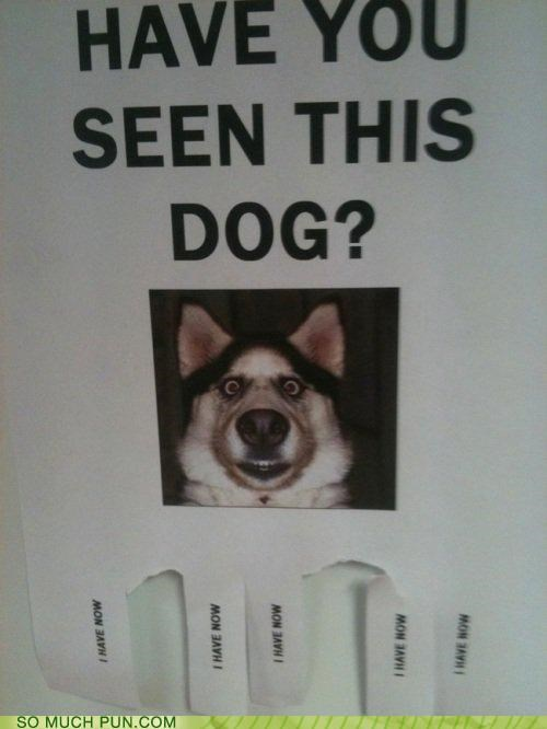 awesome dogs flyer have literalism question seen sign you - 4452531712