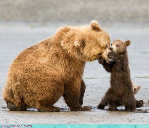 acting like animals baby bear bears concern cub doctor examining pain - 4452553216