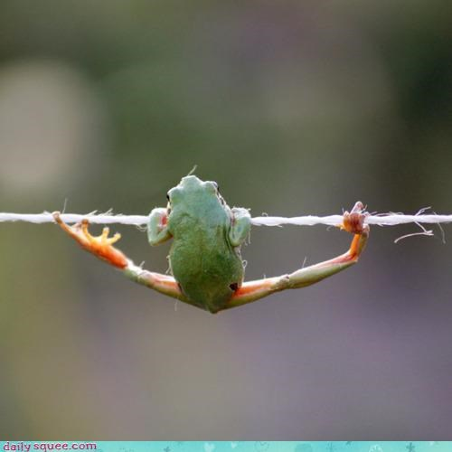 acting like animals,afraid,clinging on,danger,dangerous,dangling,foolish,frog,tightrope,walking,wire