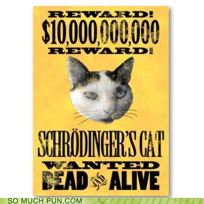 Ad alive and box cat dead or paradox poster reward schrodinger schrodingers-cat want wanted - 4453364992