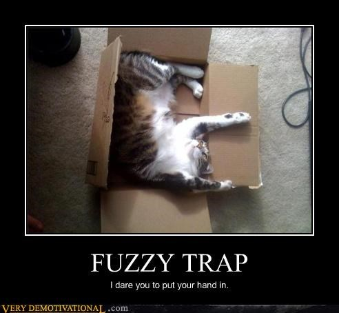 cat trap fuzzy claws