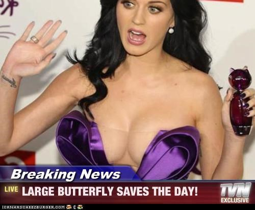 Breaking News - LARGE BUTTERFLY SAVES THE DAY!