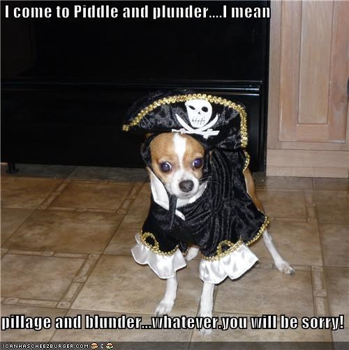 best of the week blunder chihuahua confused costume dressed up Hall of Fame i has a hotdog miscommunication mistake phrase piddle pillage Pirate plunder statement threat - 4454558208