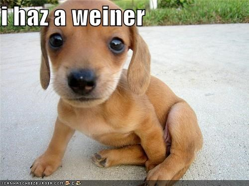 Cheezburger Image 4454566144