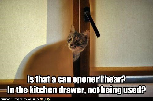 Is that a can opener I hear? In the kitchen drawer, not being used?