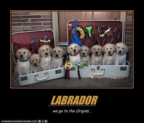 LABRADOR we go to the Origins...