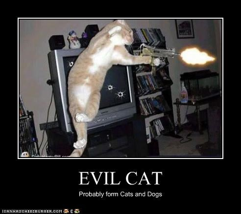 EVIL CAT Probably form Cats and Dogs