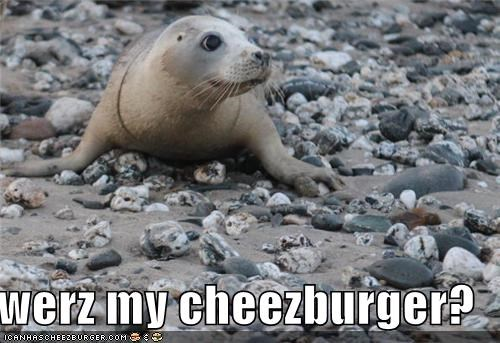 Cheezburger Image 4455692032