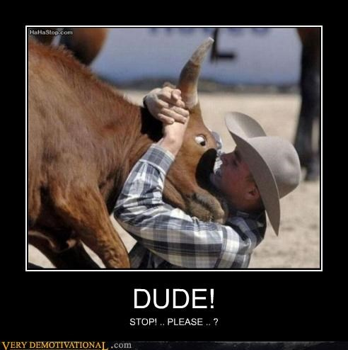 cow fight bull cowboy - 4455735296