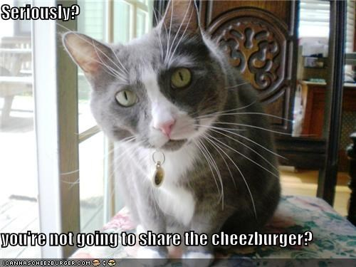 Cheezburger Image 4456190976