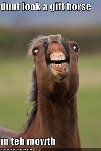 animals,critters,gift horse,gross,idioms,mouth,teeth