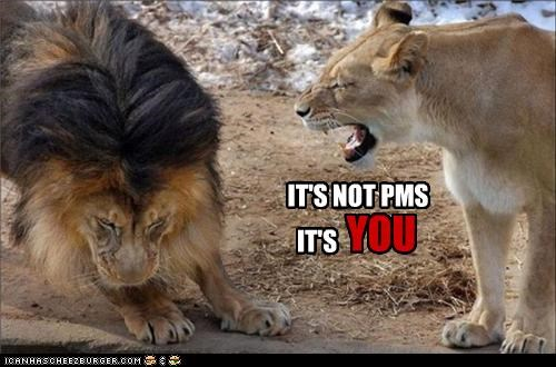 angry caption captioned cause explanation grumpy lion lioness not pms reason upset yelling you - 4456559616