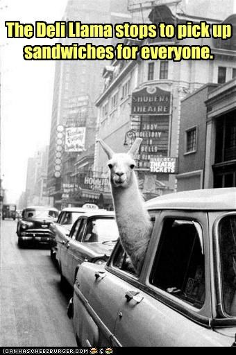 animal,funny,llama,Photo,religion,wtf