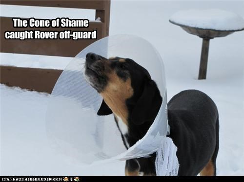 The Cone of Shame caught Rover off-guard