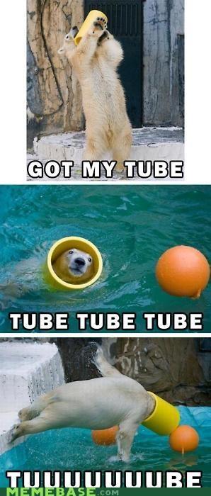 Haminals,Memes,polar bear,tube