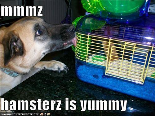 Cheezburger Image 4457486592