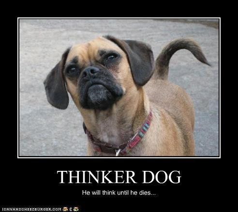 THINKER DOG He will think until he dies...