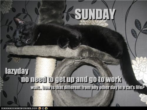 caption,captioned,cat,difference,different,getting up,going,lazy,no,no need,question,sleeping,sunday,work