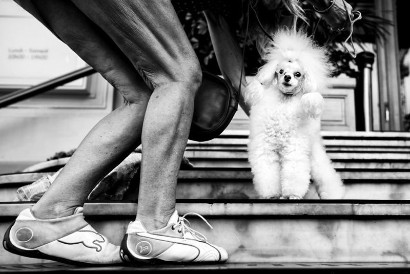 world dogs photos photographer - 4457733