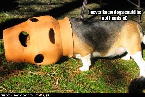I never knew dogs could be pot heads xD