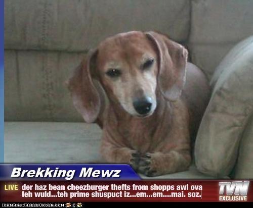 Cheezburger Image 4458148352