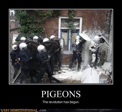 cops revolution pigeons - 4458170368