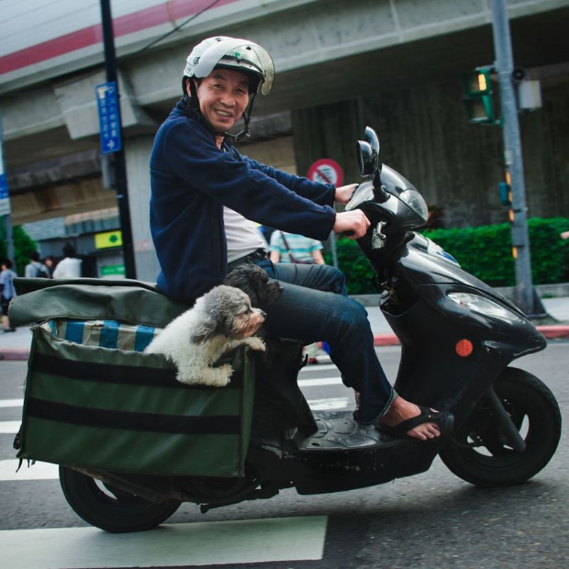 dogs cute scooter funny - 4458245