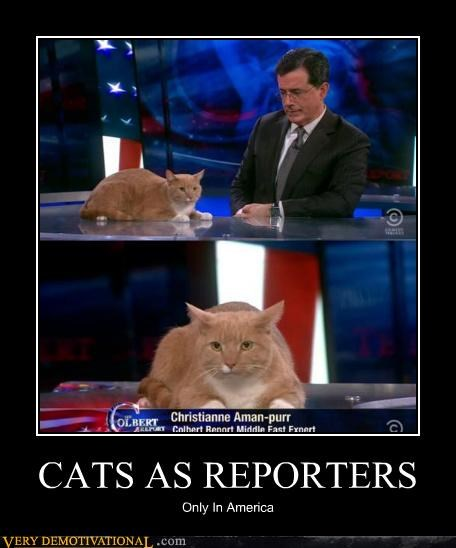 CATS AS REPORTERS Only In America