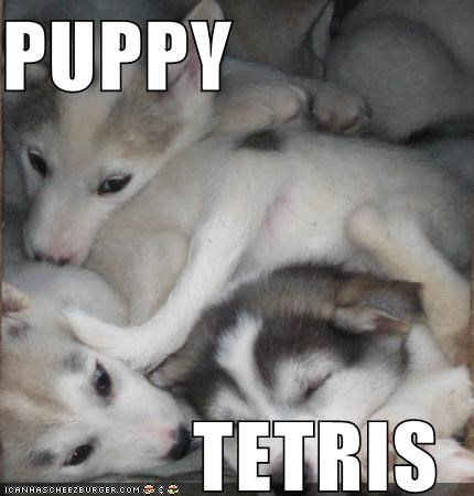 asleep huskies husky pile puppies puppy sleeping tetris - 4458613248