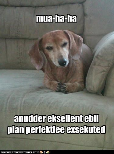 best of the week dachshund evil executed Hall of Fame i has a hotdog laughing maniacal perfect perfectly plan satisfied scheming success