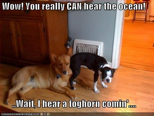 basenji boxer butt fart foghorn hear the ocean mixed breed ocean oops whatbreed
