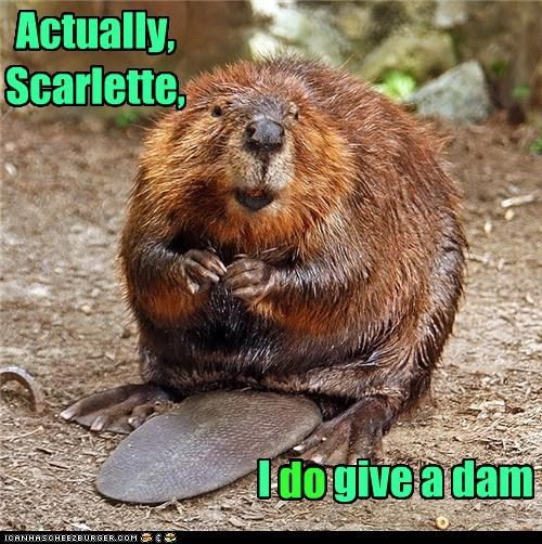 beaver,caption,captioned,dam,do,famous,give,gone with the wind,homophone,pun,quote,scarlette