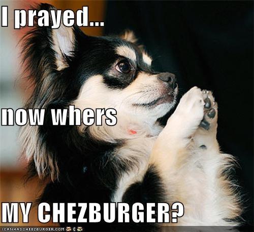 Cheezburger Image 4459434752