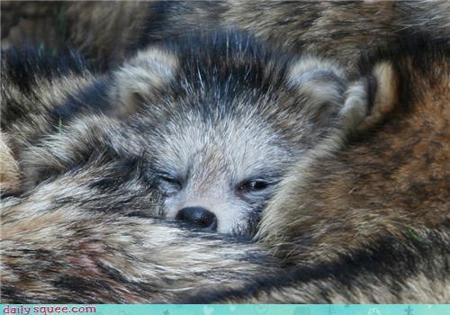 baby chrysalis cocoon cuddling cute Pokémon raccoon rhyme - 4459793152