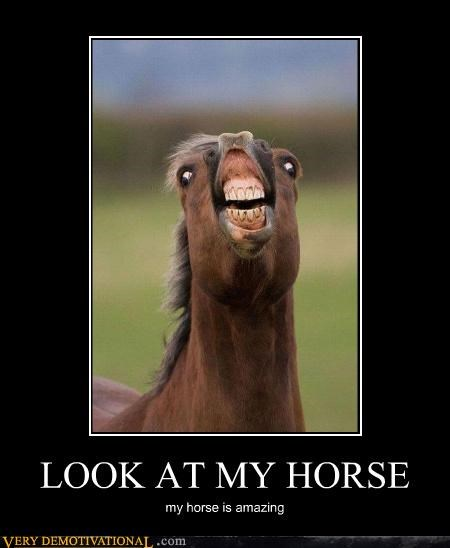 animal crazy face horse meme song - 4459985664