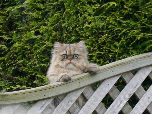 photos Cats funny - 4460037