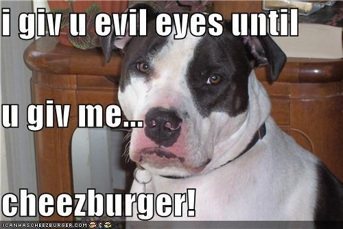 Cheezburger Image 4460105728