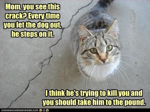 advice,caption,captioned,cat,crack,dogs,evil,explanation,pound,protection,scheme,suggestion