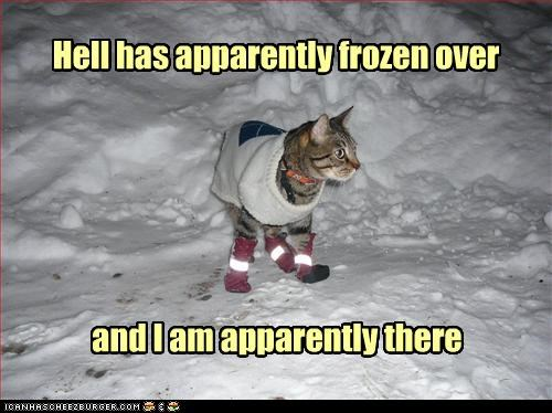 apparently,boots,caption,captioned,cat,cold,displeased,do not want,dressed up,frozen,Hall of Fame,hell,snow,sweater,there