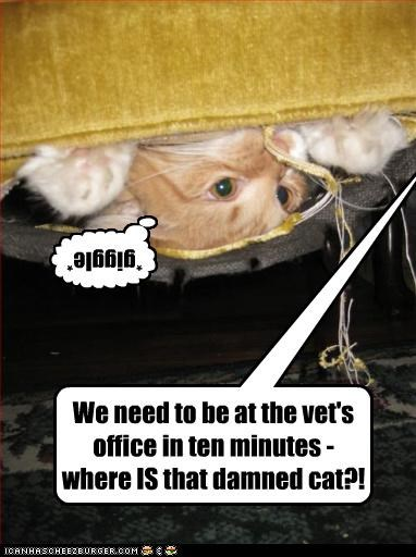 We need to be at the vet's office in ten minutes - where IS that damned cat?! ] *giggle*